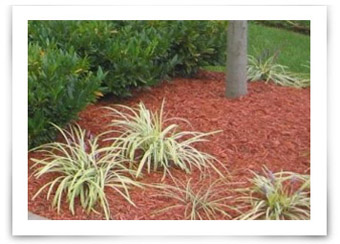 Choosing The Best Mulch Color For Your Lawn And Garden